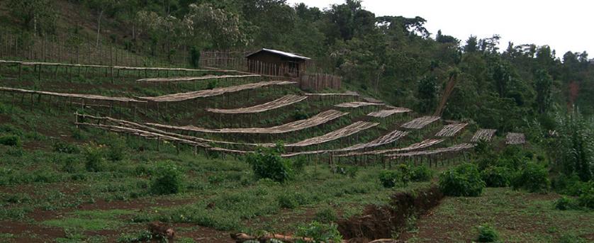 Oromia-Farm